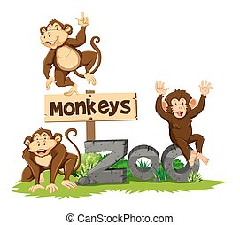 Three monkeys in the zoo