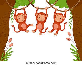 Monkeys - Three Monkeys Swinging Among Vines for Background