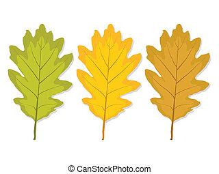 three multi-colored oak leaves