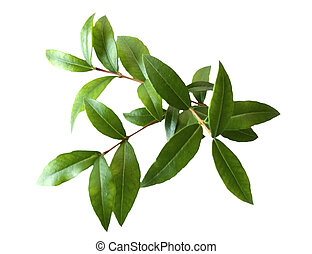 three myrtle branches on a white background