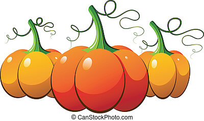 Three orange pumpkins over white