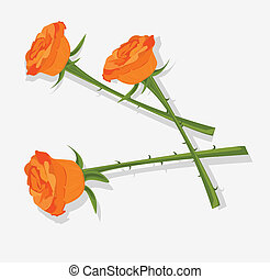 three orange roses on a white background