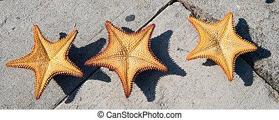 three orange starfich on grey