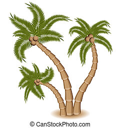 Three Palm Tree Group - An image of a group of three palm...