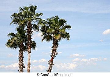 Three palm trees against blue sky