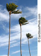 Three tropical palm trees isolated against a blue sky.