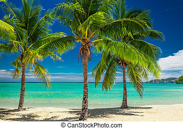 Three palm trees over blue lagoon in Fiji