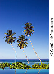 Three palms by swimming pool