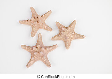 Three peach sand colored starfish isolated