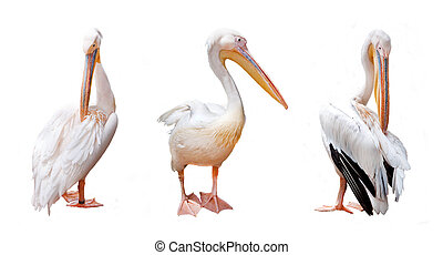 Three pelican beak and pink on a white background