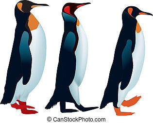 Three penguins lined up to walk