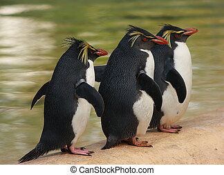 penguins - three penguins