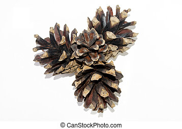 Three pine cones - Pine Cones. Isolated object on a white ...