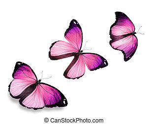 "Three pink butterfly ""morpho"", isolated on white background"