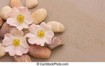 three pink flower wild rose on pebbles on a gray background, with space for posting information. Spa stones treatment scene, zen like concepts. Flat lay, top view