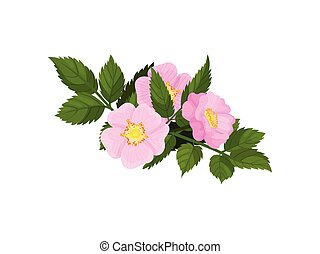 Three pink flowers on a white background. Vector illustration.