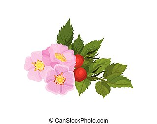 Three pink flowers with fruits on a white background. Vector illustration.