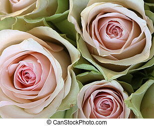 Three pink roses - Close-up of a bouquet of three pink roses...