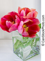 Three pink tulips in a cubic glass vase on a white background