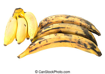 Three plantain bananas versus regular on white background