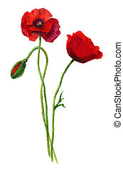 Three poppies. Water colour painting