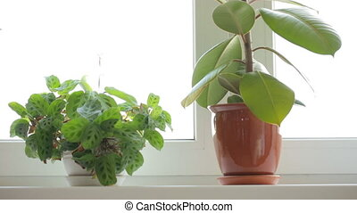 Three pot plants on windowsill