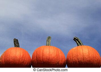 Three pumpkins against blue sky