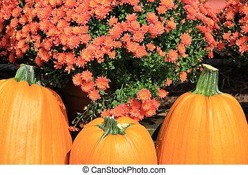Three pumpkins and Fall mums