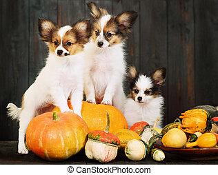 three puppy with pumpkin