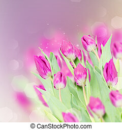 three purple tulip flowers