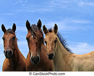 Three quarter horses standing attentively