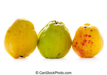 quince fruit isolated - three quince fruit isolated on white...
