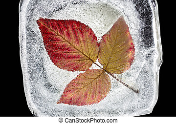 Three red autumn leaves inside the ice