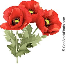 Three red poppy flower with green leaves. - Vector...