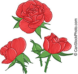 Three red roses and bud, vector illustration