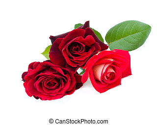 three red roses are on a white background