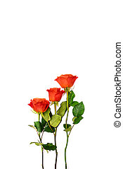 Three red roses on a white background. Isolated roses with green stems and leaves. Greeting card for a holiday, anniversary, birthday. Place for text