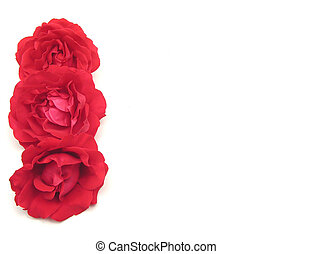 Three red roses on the left side of white background