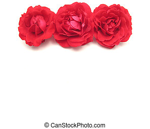 Three red roses on the top edge of white background