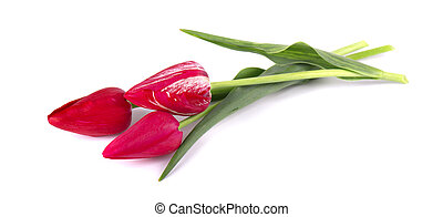 Three red tulip bunch isolated on white background.