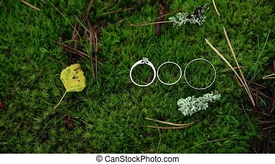 Three rings in moss at forest