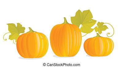 Three ripe yellow pumpkins and pumpkin leaves