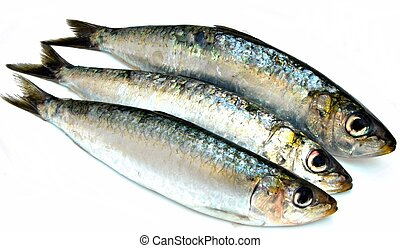 Three sardines next to each other surrounded by white background