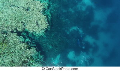 An aerial shot of three scuba divers swimming underwater. The divers are near the great barrier reef.