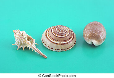 Three sea shells on the turquoise background.