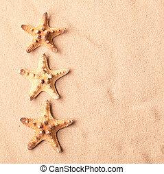 three sea starfish on beach sand