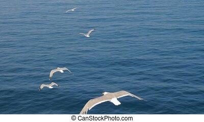 Wild birds in the sky. Birds flying. Seagulls flying against blue sky. Seagull soaring in the sky. Seabird In Flight. Greece 4K