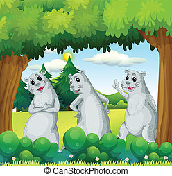 Three sealions in the forest