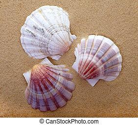 Three Seashells on the Beach