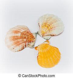 Three shells in a circle